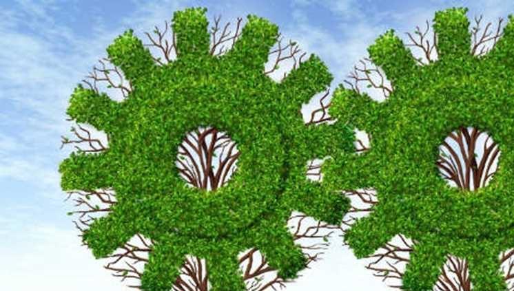 PET de Engenharia Florestal seleciona bolsistas, inscrições podem ser feitas até o dia 12 de abril